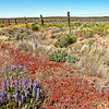 High Desert Landscapes : Amazing color where you least expect it!